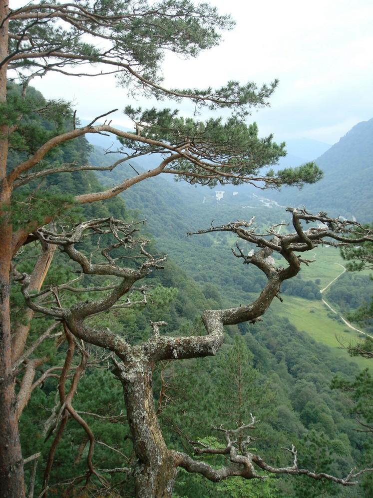 Вид на долину. Архыз